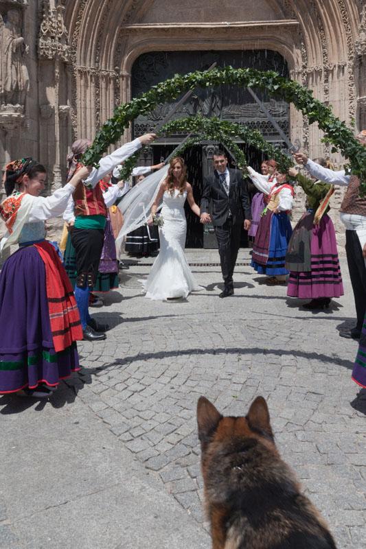 Perros y mascotas en las bodas
